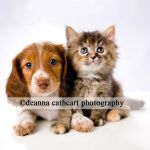 Dachshand and Friend 1 by deathbycanon