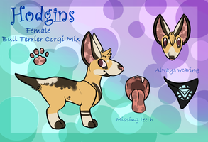 Hodgins the Bull Terrier Corgi Mix Reference by PieCreature