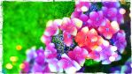 Flower Edit by blackroselover