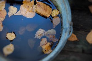 leaves in water by Anti-Pati-ya
