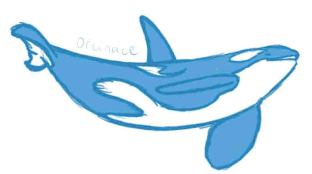 Orca Sketch by orcinace