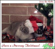 Murray Christmas Card by dygel