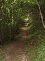 Path in the forest by fairling-stock