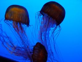 Jelly Fish 07 by LinzStock