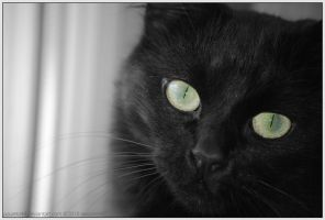Beautiful Eyes by Arunaudo