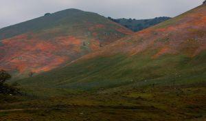 Mountains of Color by zootnik