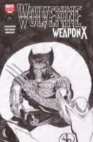 Wolverine Weapon X Sketch by hiasi
