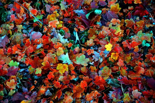 Colorful leaves - Autumn goodbye by Leladiel