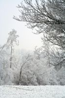 winterland 35 by priesteres-stock