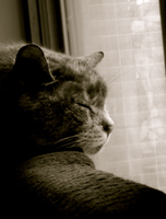 My cat 3 by NeonDance123