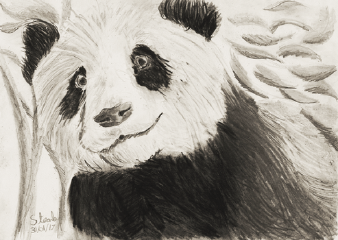 Giant Panda by SulaimanDoodle