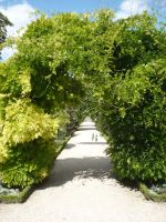 Vegetal arch by Cat-in-the-Stock