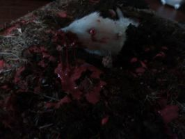 Taxidermy zombie mouse by LivingBiohazards