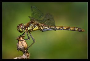 In perfect balance by MessiahKhan
