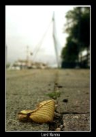 Fallen Leaf by uae4u