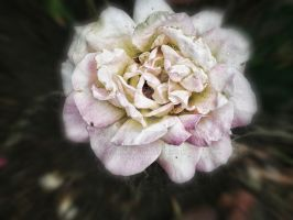 Another Flower by BDLC