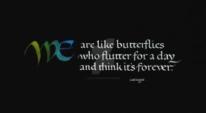 We are like butterflies ... by isolationism