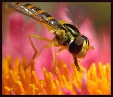 Hoverfly in Heaven by sapog
