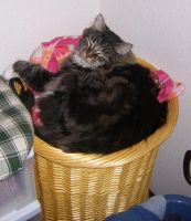 Boots in Hamper by Sadict