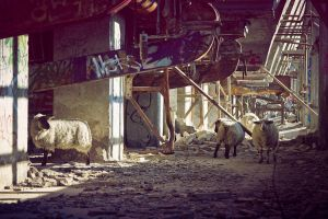 industrial sheeps 3 by Fledermausland