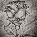 A rose by TharukaDul