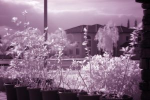 infrared plants by djqcookie