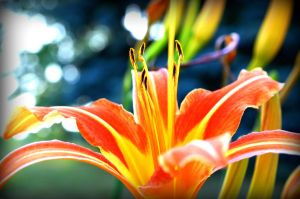 Lilly2 by Dyba5592