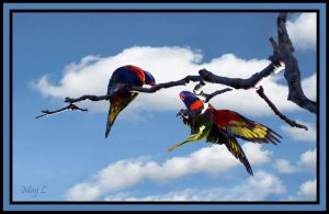 Rainbow Lorikeets by MayEbony
