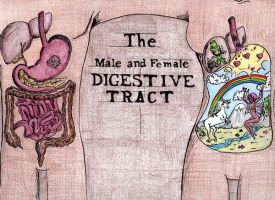 The Digestive System by krousteh
