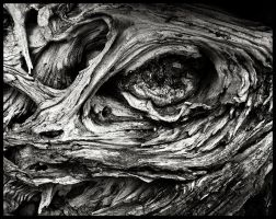 The Eye of Decay by AForAdultery