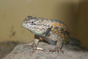 animal - 001 Lizard by thalija-STOCK