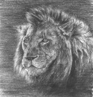Lion - quick by xMolly