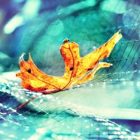 Fallen Oak Leaf by incolor16