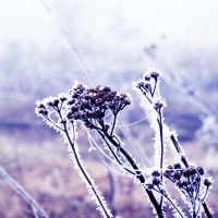 first frost by all17