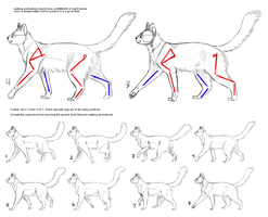 How to Cat: Walk Cycle by SowoD