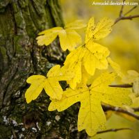 Yellow and Black by amrodel