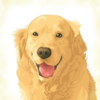 Golden retriever by tsugami