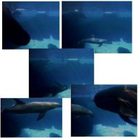 dolphins and whales by orcalover165