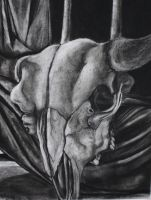 charcoal still life by landoNY