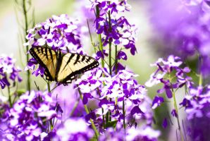 Butterfly in Summer 2 by wakak