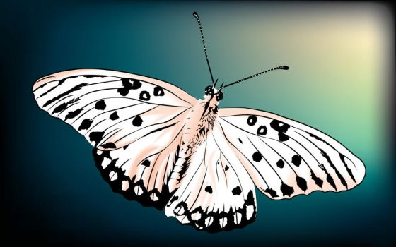 white butterfly by DanielleQuing