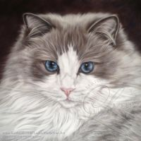 Cat Pastel Portrait of Leyla by LouiseMarieFineArt