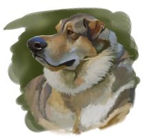dog caricature by claireGary