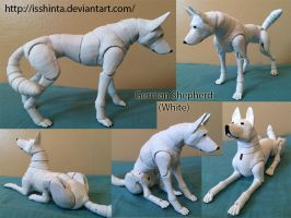 White German Shepherd by Isshinta