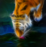 Tiger Drinking Close-Up by SuliannH