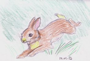 Running bunny by AngelSan1