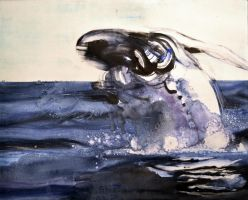 Whale Dream 1 by tombennett