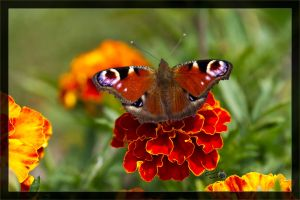 Flower and butterfly by deaconfrost78