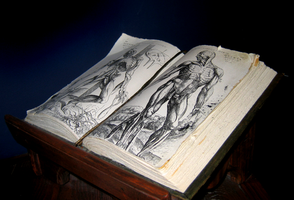 Anatomy book by Azenor-stock
