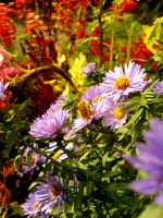 Flowers and bee by nyc0